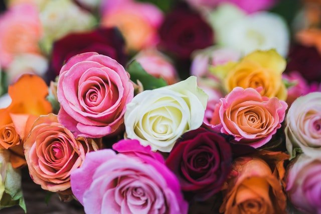 Types of Roses for Your Plant Installation in Philadelphia