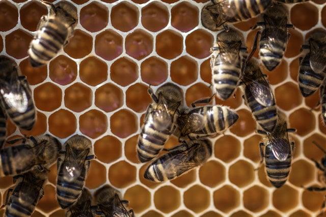 Beeswax versus Soy