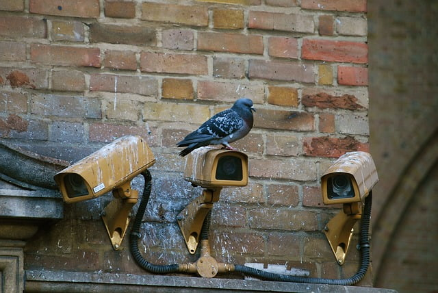 How CCTV Drain Survey Can Help Maintain Your Commercial Building Better
